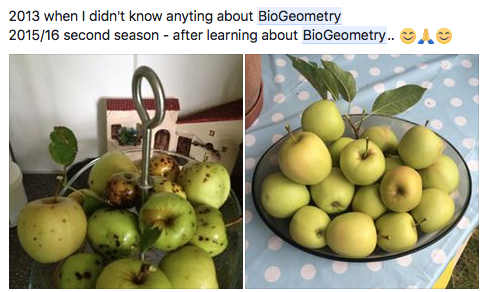 apples (testimony).png
